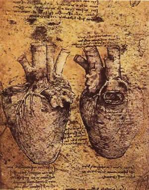 Леонардо да Винчи анатомические рисунки сердце плод череп кости Сердце человека