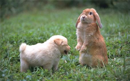 1987 год кролика под знаком овна